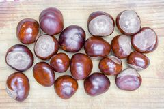 Pile of aesculus hippocastanum or conker tree nuts on tablecloth. Top view. Chestnuts for Christmas.  stock images