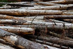 Pile of aged weathered worn old logs 6 royalty free stock photo