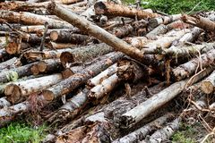 Pile of aged weathered worn old logs royalty free stock image