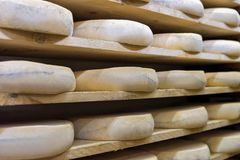 Pile of aging Cheese at maturing cellar Franche Comte Royalty Free Stock Photos