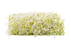 Alfalfa sprouts. A pile of alfalfa sprouts on a white background Stock Image