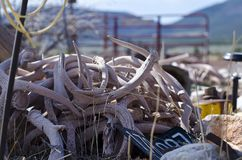 A pile of antlers in the desert junkyard stock photo