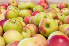 Pile of apples. Pile of colorful organic apples during harvest time. Shallow depth of field stock image