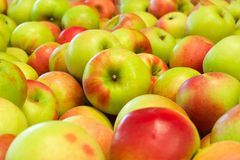 Pile of apples. Pile of colorful organic apples during harvest time. Shallow depth of field Royalty Free Stock Images