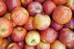 A pile of apples gala as background Stock Photos