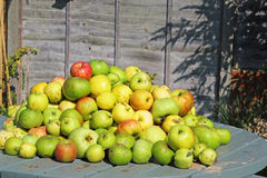 Pile of apples on a table top. Royalty Free Stock Photos