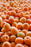 Pile of apricots Stock Photos