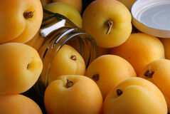 Pile apricots Royalty Free Stock Photos