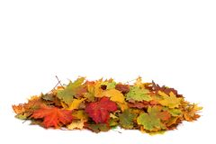 Pile of autumn colored leaves isolated on white background. royalty free stock photography