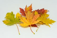 Pile of autumn colored leaves isolated on white background. Yellow Red and colorful foliage colors in the fall season Stock Photo