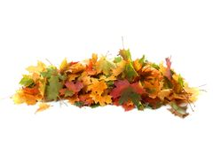 Pile of autumn colored leaves on white background.A heap of dif stock photos