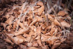 Pile of autumn leaves stock images