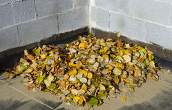 A pile of autumn leaves Royalty Free Stock Photography