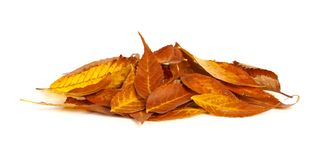 Pile of autumn leaves over a white background Royalty Free Stock Photography