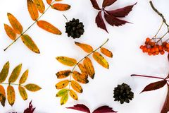 Pile of autumn leaves, pine cones nuts over white background. collection beautiful colorful leaves border from autumn Stock Photo