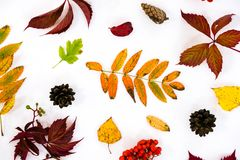 Pile of autumn leaves, pine cones nuts over white background. collection beautiful colorful leaves border from autumn Stock Photography
