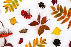 Pile of autumn leaves, pine cones nuts over white background. collection beautiful colorful leaves border from autumn Stock Photos
