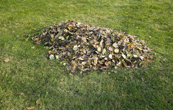 Pile of autumn leaves placed on grass Royalty Free Stock Images