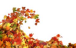 Pile of autumn maple colored leaves royalty free stock photography