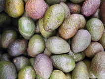 Pile of avocados. Full frame of avocados at market royalty free stock image