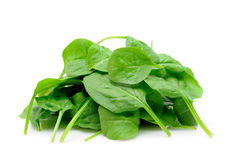 Pile of baby spinach Royalty Free Stock Images