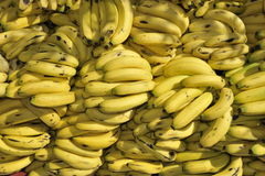 Pile of Bananas. Pile of fresh and delicious bananas Royalty Free Stock Photography