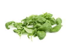 Pile of basil leaves isolated Stock Photography