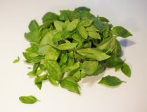 Basil leaves for Pesto sauce Stock Image