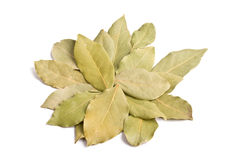Pile of bay leaves isolated stock photography
