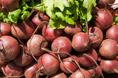 Pile of Beets Royalty Free Stock Photography