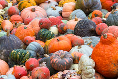 Pile of big colorful pumpkins, natural background Royalty Free Stock Images