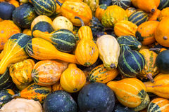 Pile of big colorful pumpkins, natural background Stock Images