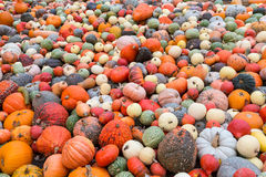 Pile of big colorful pumpkins, natural background Royalty Free Stock Photo
