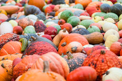 Pile of big colorful pumpkins, natural background Royalty Free Stock Photography