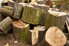 Pile of big hornbeam chopped logs Royalty Free Stock Images