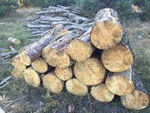 Pile of big trunks of wood Royalty Free Stock Images