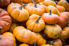 Pile of big yellow pumpkins, natural background Royalty Free Stock Images