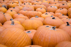 Pile of big yellow pumpkins, natural food background Royalty Free Stock Images