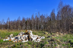 Pile of a birch firewood. Royalty Free Stock Photos