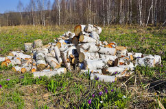 Pile of a birch firewood. Royalty Free Stock Photography