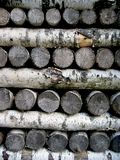 A pile of birch logs Royalty Free Stock Image