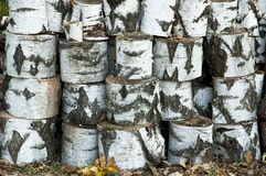 Pile of birch logs Stock Photos