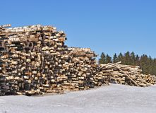Pile of birch logs Stock Images