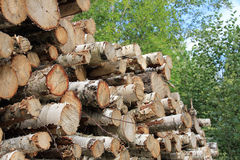 Pile of birch logs Stock Photo