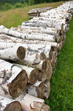 Pile of birch wood Royalty Free Stock Image