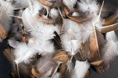Pile of bird feathers Stock Photos