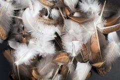 Pile of bird feathers Stock Photos