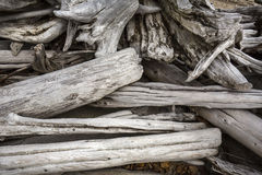 Pile of bleached driftwood logs at Flagstaff Lake, Maine. Royalty Free Stock Photo