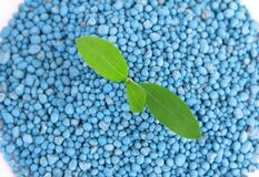Pile of blue chemical fertilizer and green plant isolated on white. Gardening time