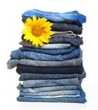 Pile of blue jeans and sunflower. Isolated on white Stock Photos
